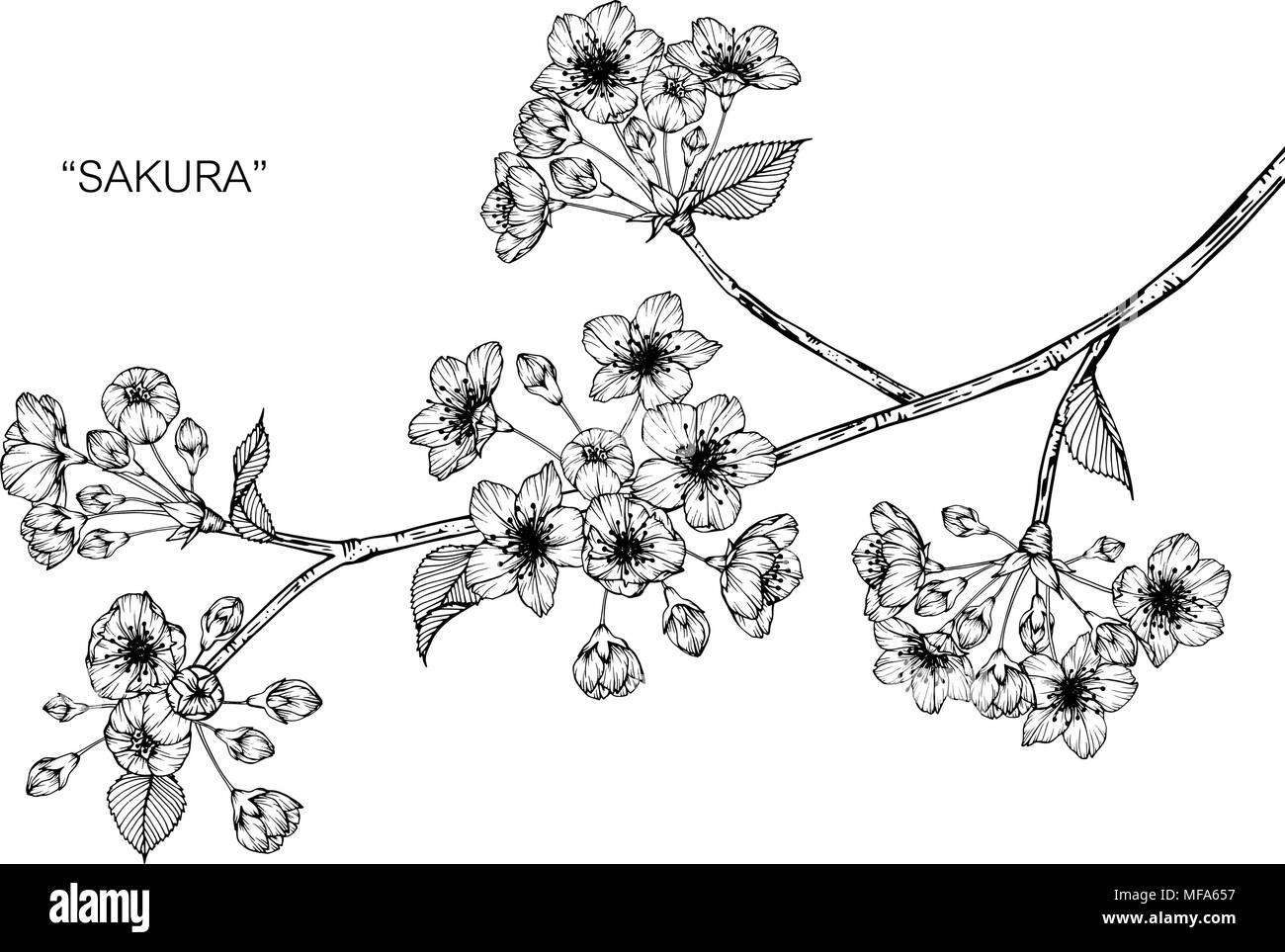 Dessin Fleur Sakura Illustration Noir Et Blanc Avec Dessin Au Trait