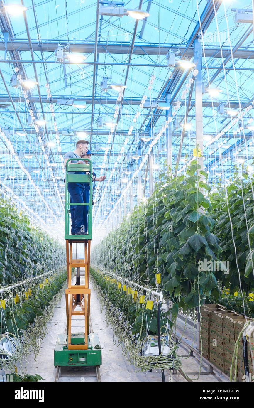 L'inspection des travailleurs Plants in Greenhouse Photo Stock