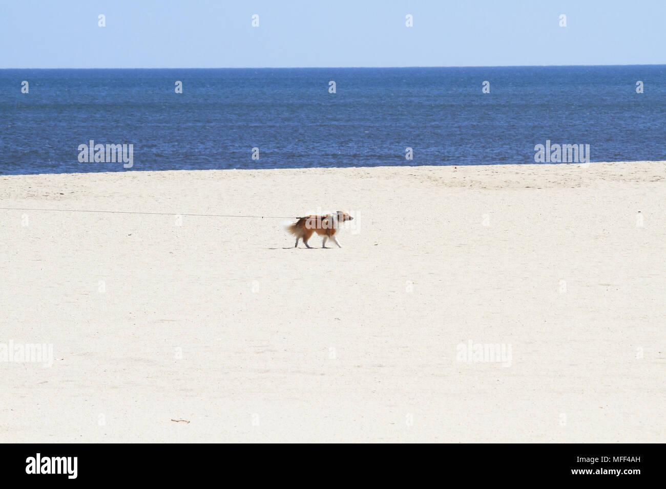 La plage de Point Pleasant Beach, New Jersey, USA Photo Stock