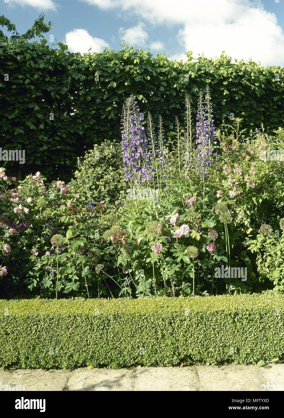 Fleur de jardin border delphiniums clippé couverture détail bas ...