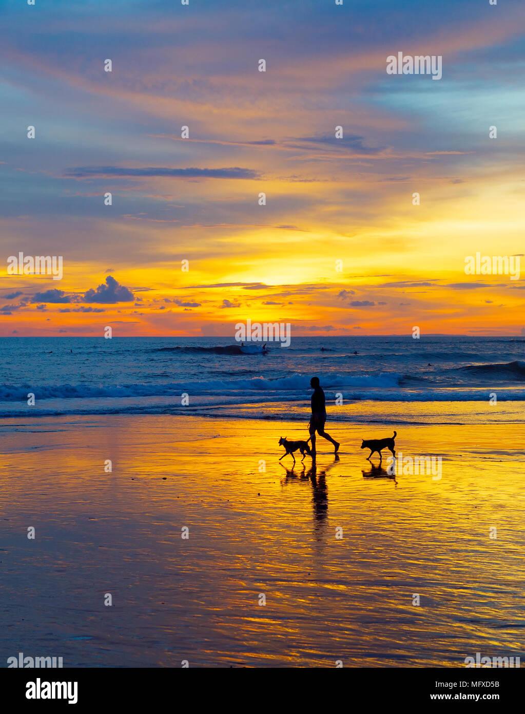 Silhouette d'un homme marchant avec les chiens sur une plage au coucher du soleil. L'île de Bali, Indonésie Photo Stock