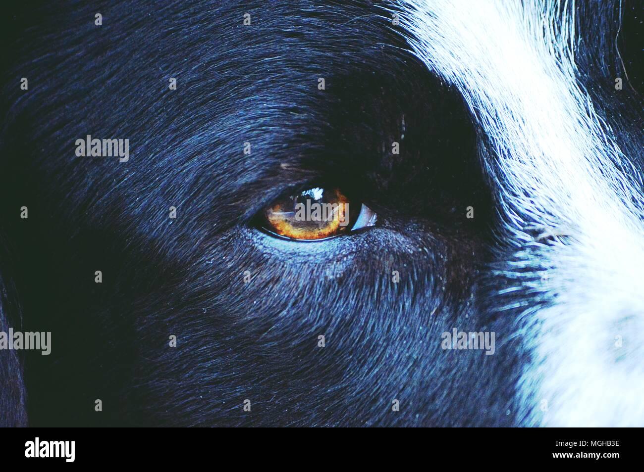 Une journée dans une vie de chien Photo Stock