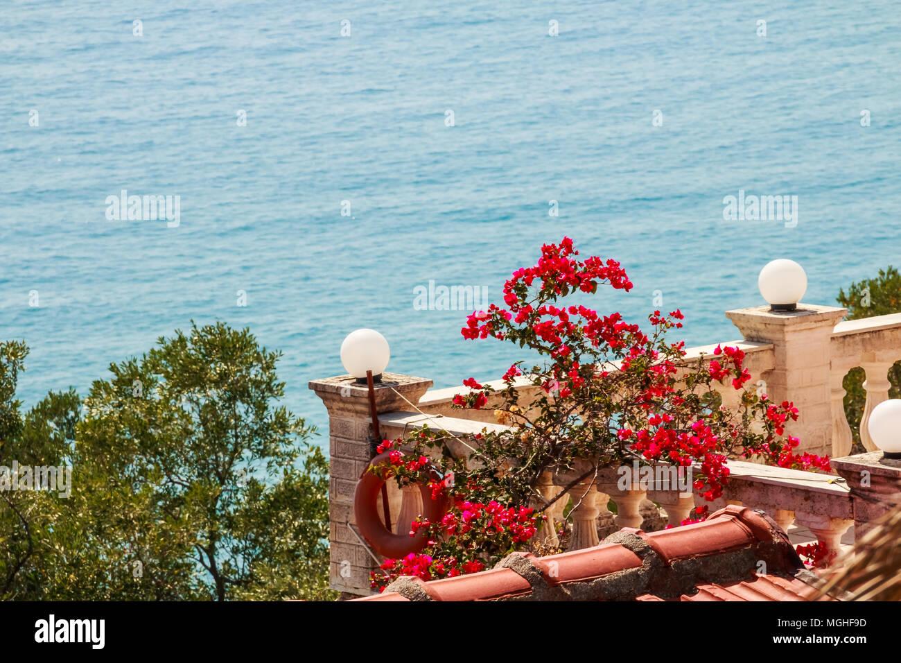 Vue Magnifique Sur Mer Et Fleurs De Bougainvilliers Paysage
