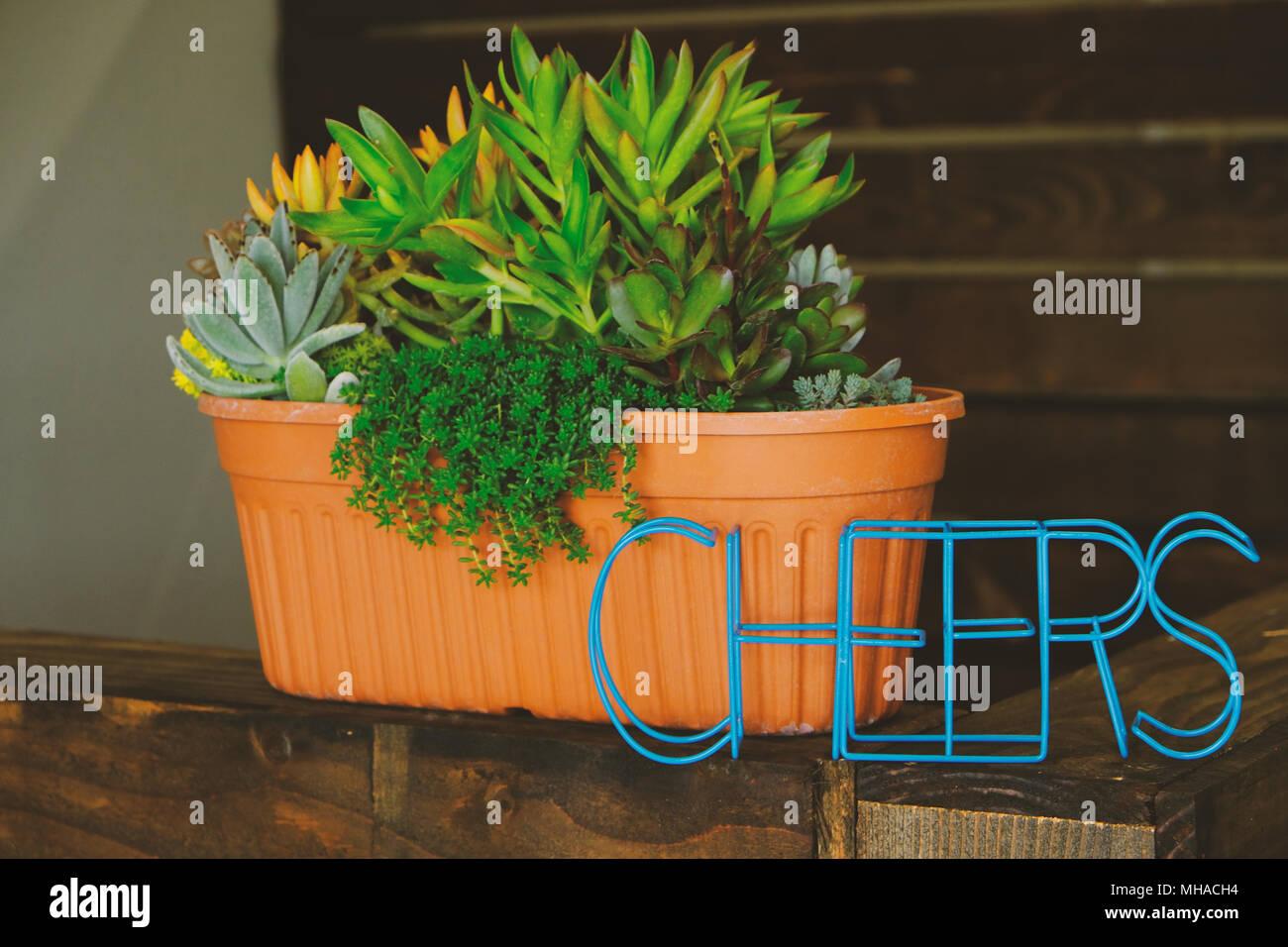 Plantes succulentes en pot pour lintérieur bureau usine avec blue
