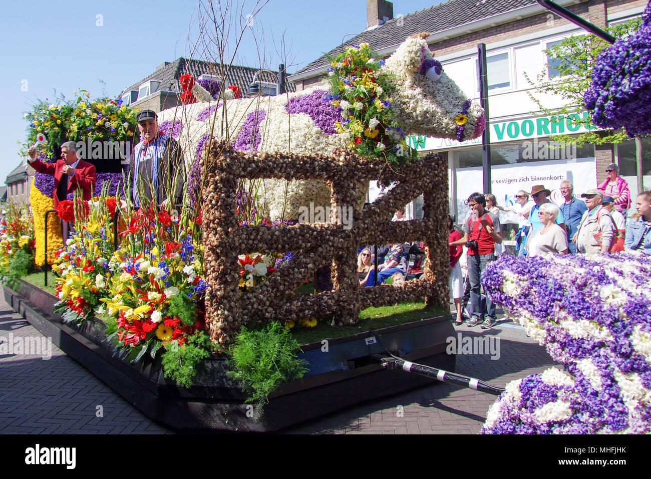 Une fleur flotter en passant par Voorhout, village de la