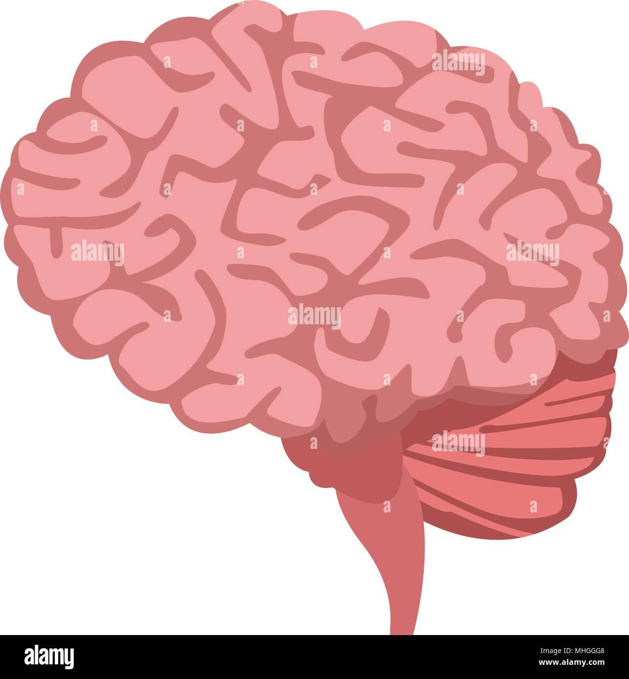 Isolé du cerveau humain Photo Stock