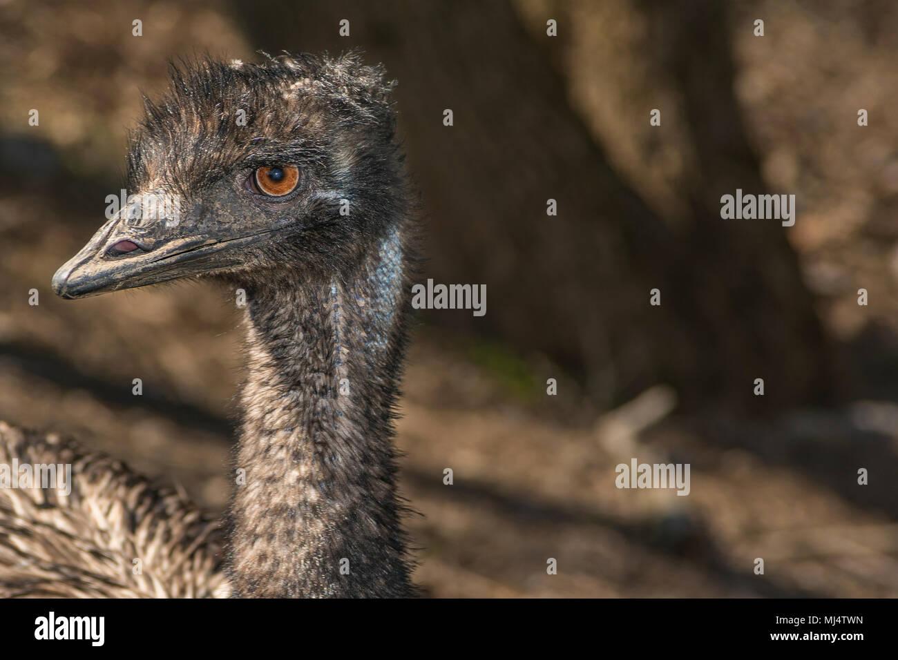 Head shot d'une UEM Photo Stock