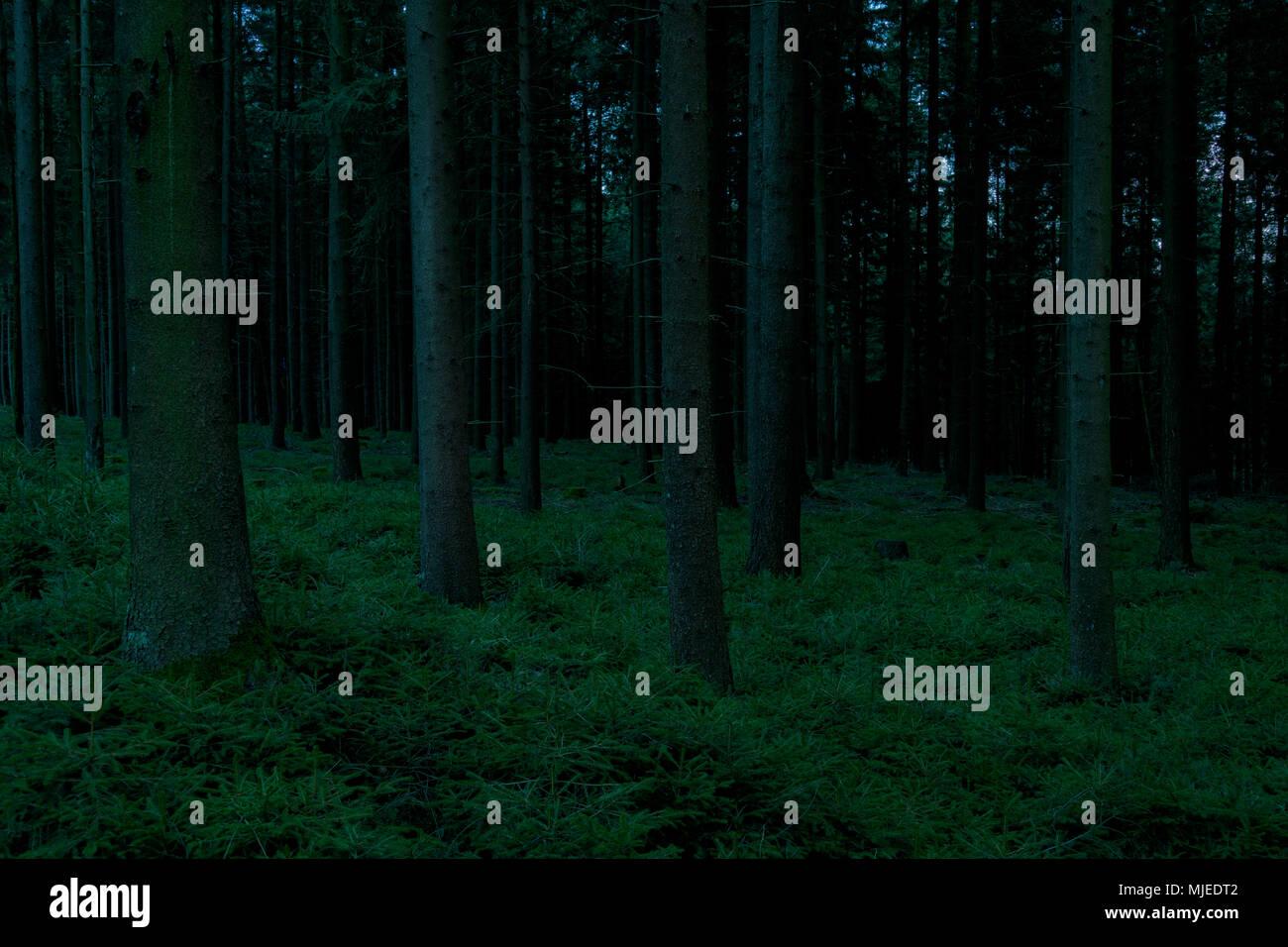 Forêt sinistre à l'aube, Odenwald, Hesse, Allemagne Photo Stock