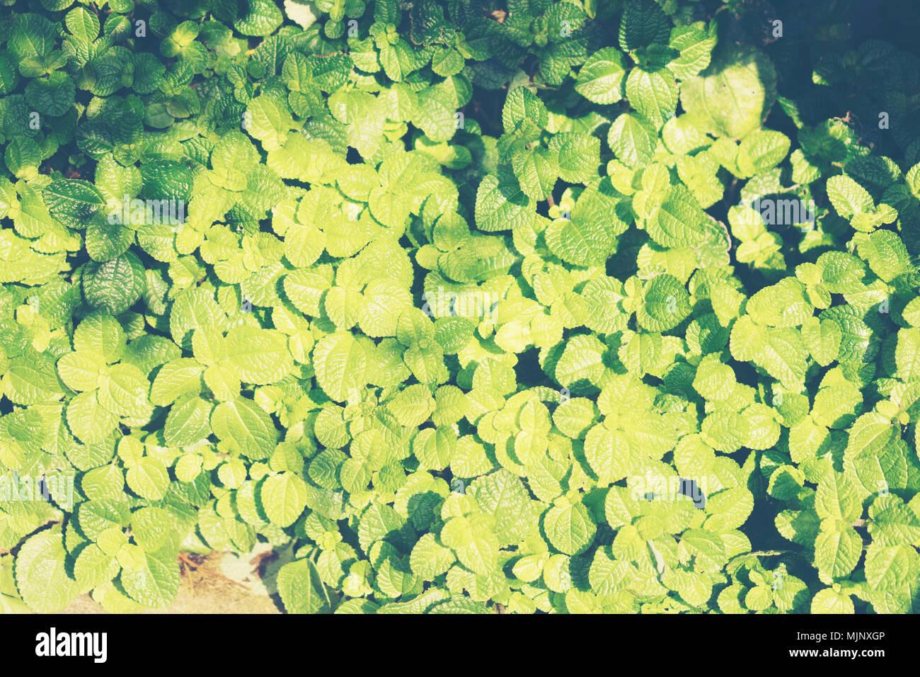 Jardinage Floral background avec variété de couleurs des ...