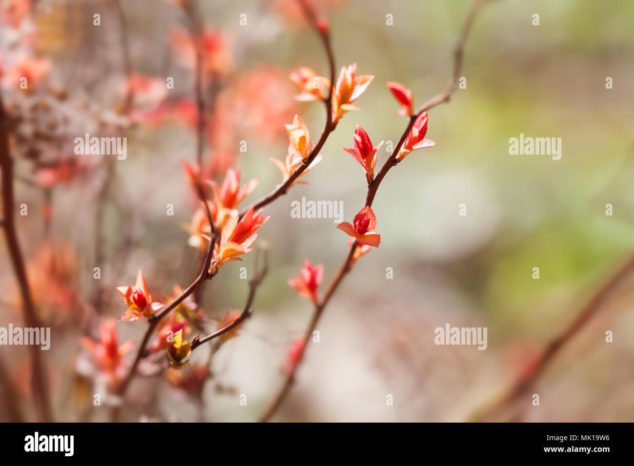 Beau Printemps Floral Background Branche D Arbre En Fleur Rose