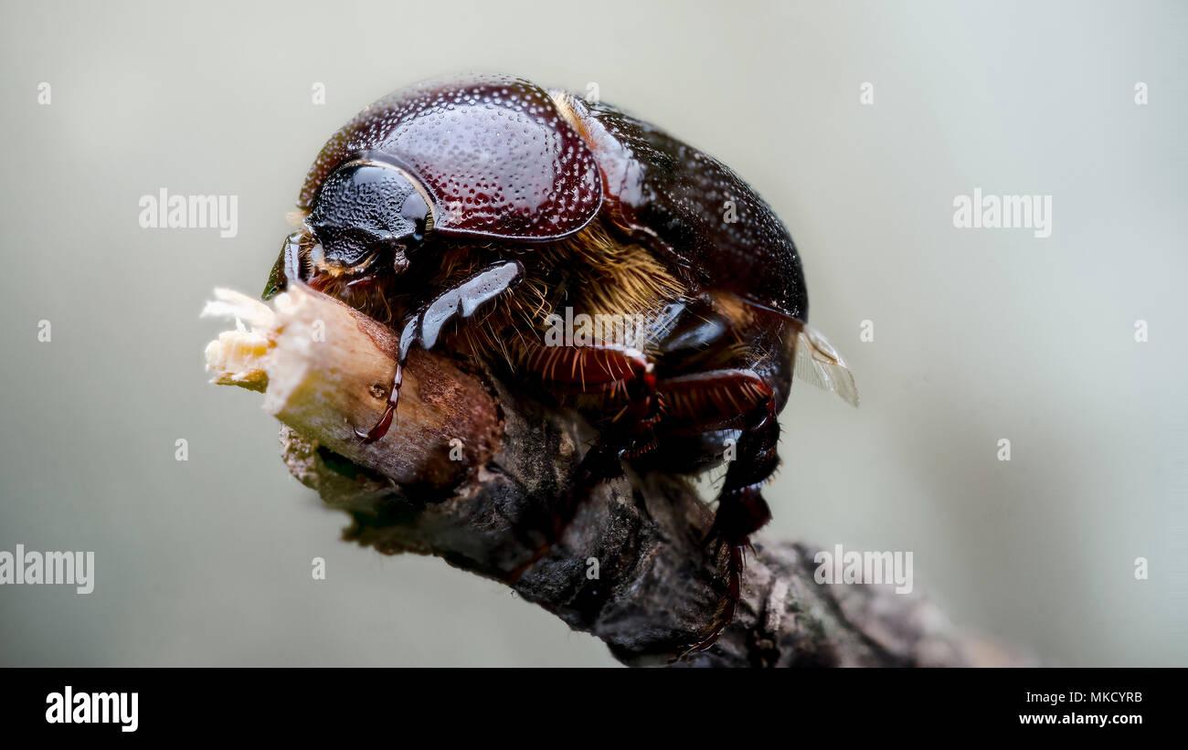 Beetle Photo Stock