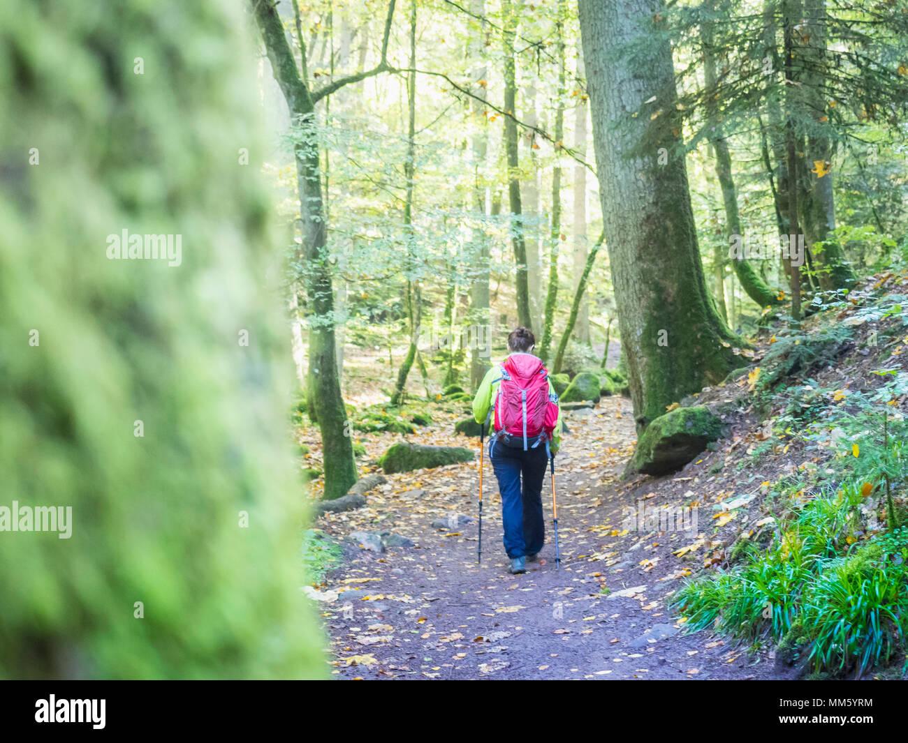 Femme en randonnée dans le Nord de la Forêt Noire, Monbachtal, 'Bad Liebenzell', Bade-Wurtemberg, Allemagne Photo Stock