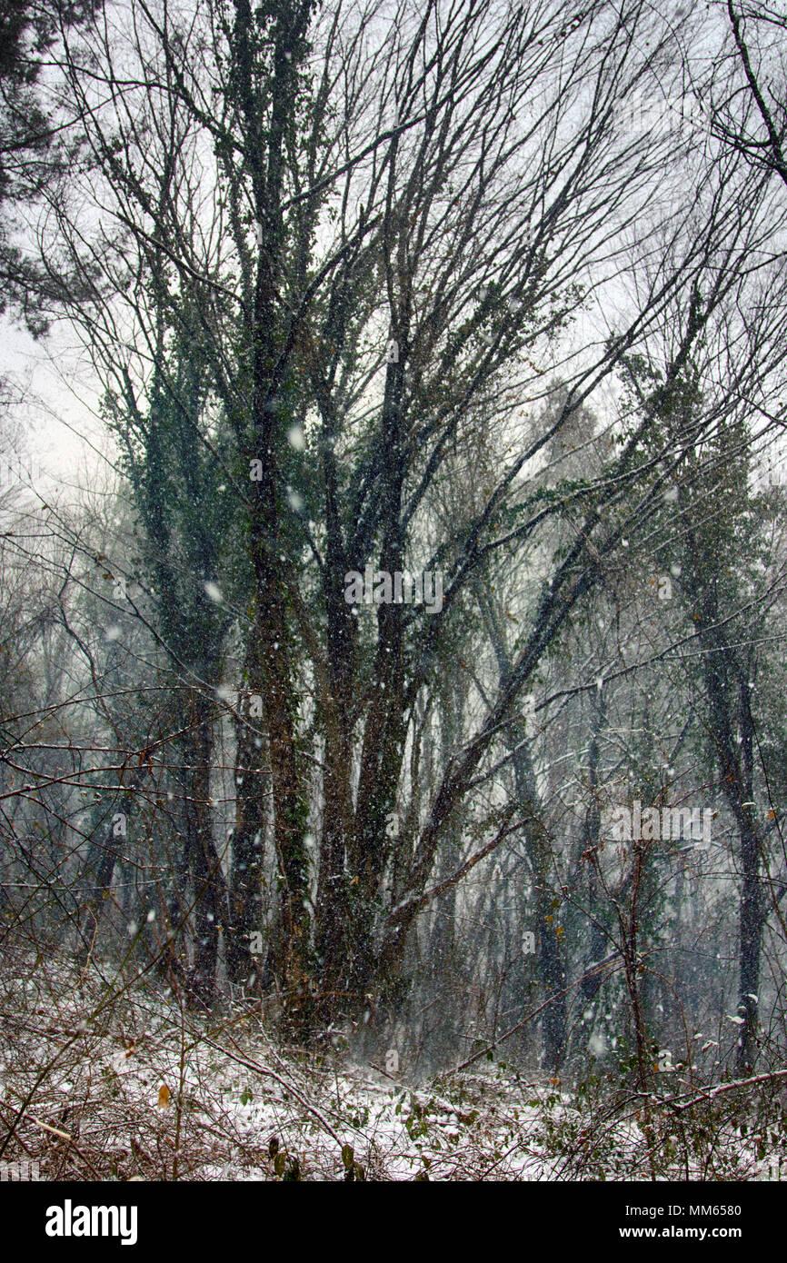 la forêt de feuillus de l'hiver sur les rives de la mer noire