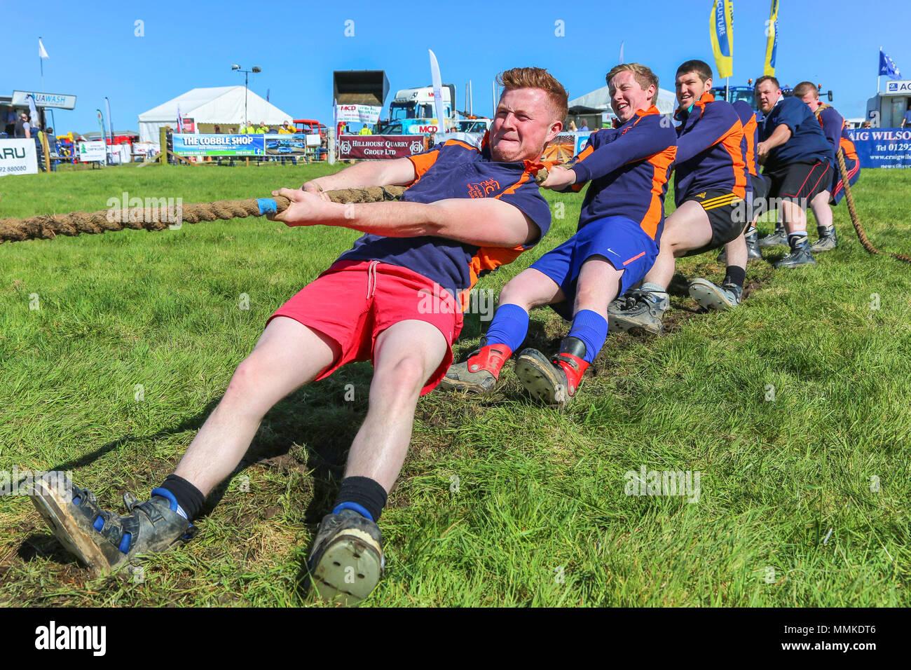 """L'Ayrshire, UK. 12 mai 2018. Par une chaude journée ensoleillée et peut, le comté d'Ayr annuel Show qui a eu lieu à l'hippodrome d'Ayr a attiré des centaines de participants au concours agricole et aussi des milliers de spectateurs. Ainsi que l'habituel concours de bovins, de moutons et de la volaille, il y avait des prix pour les gagnants de l'homme et la femme 'Jeunes Agriculteurs remorqueur de la guerre"""" et pour le meilleur crédit: camion décoré Findlay/Alamy Live News Photo Stock"""