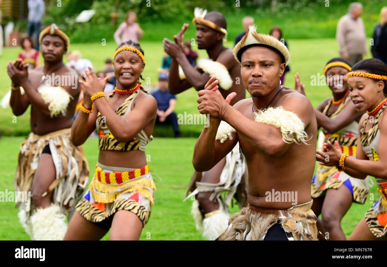 Les Lions du Zululand (un mélange culturel de musiciens et danseurs de l'Afrique du Sud, la diffusion de la culture zoulou; www.lionsofzululand.org.uk) pendant l'exécution de t Banque D'Images