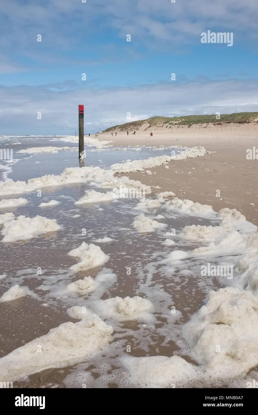 (Type d'algues Phaeocystis ) couvrent une plage de Texel, la plus grande des Waddeneilanden, lundi 16 mai 2016, Texel, aux Pays-Bas. Banque D'Images
