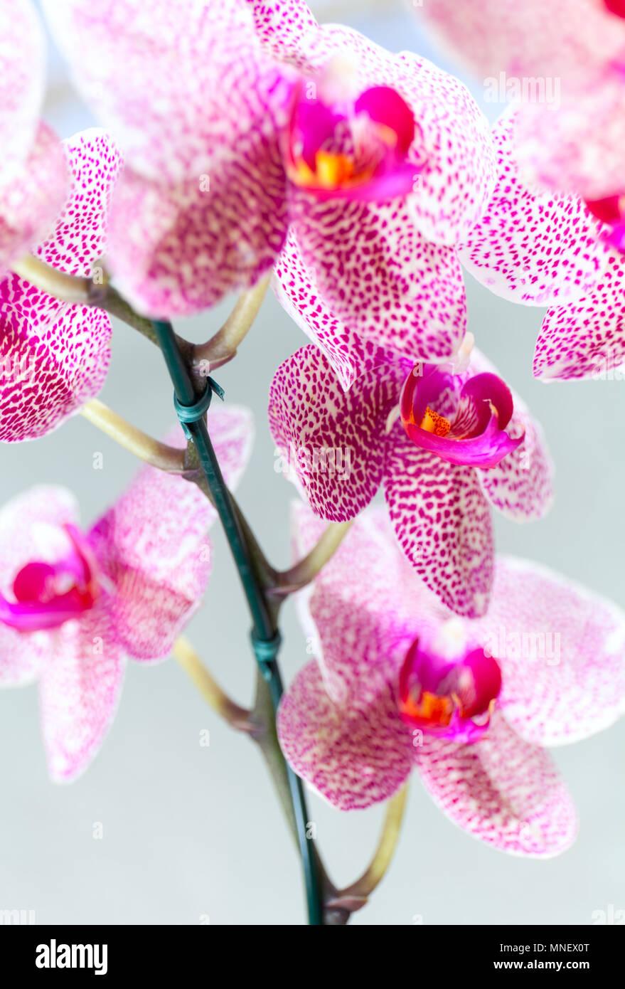 belles fleurs rose et blanche mouchet e d 39 esp ce d. Black Bedroom Furniture Sets. Home Design Ideas