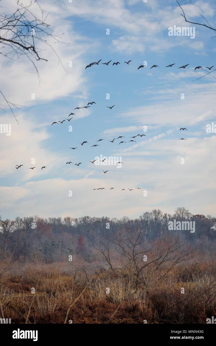 Paysage d'automne dans la région de Tuckahoe State Park, Ridgely, Maryland. Banque D'Images