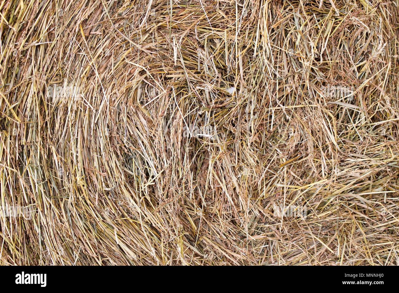 Hay, tordu dans une botte, comme l'arrière-plan Photo Stock