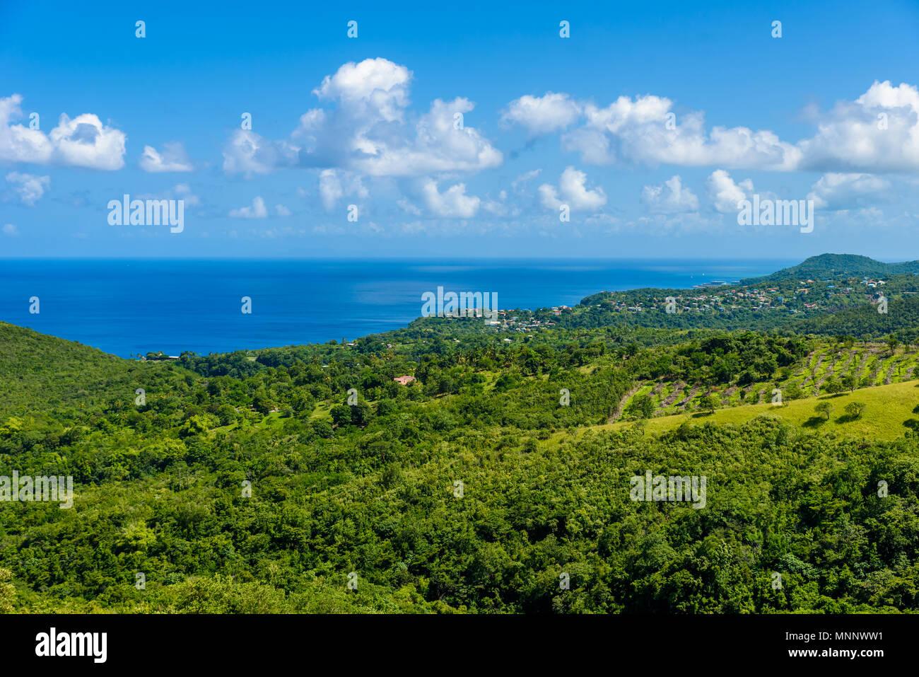 Forêt tropicale sur l'île caribéenne de Sainte-Lucie. C'est une destination paradisiaque avec une plage de sable blanc et mer turquoiuse. Photo Stock