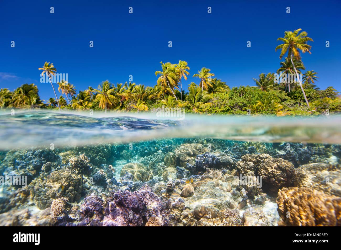 Île tropicale au-dessus de l'eau ci-dessous et Photo Stock