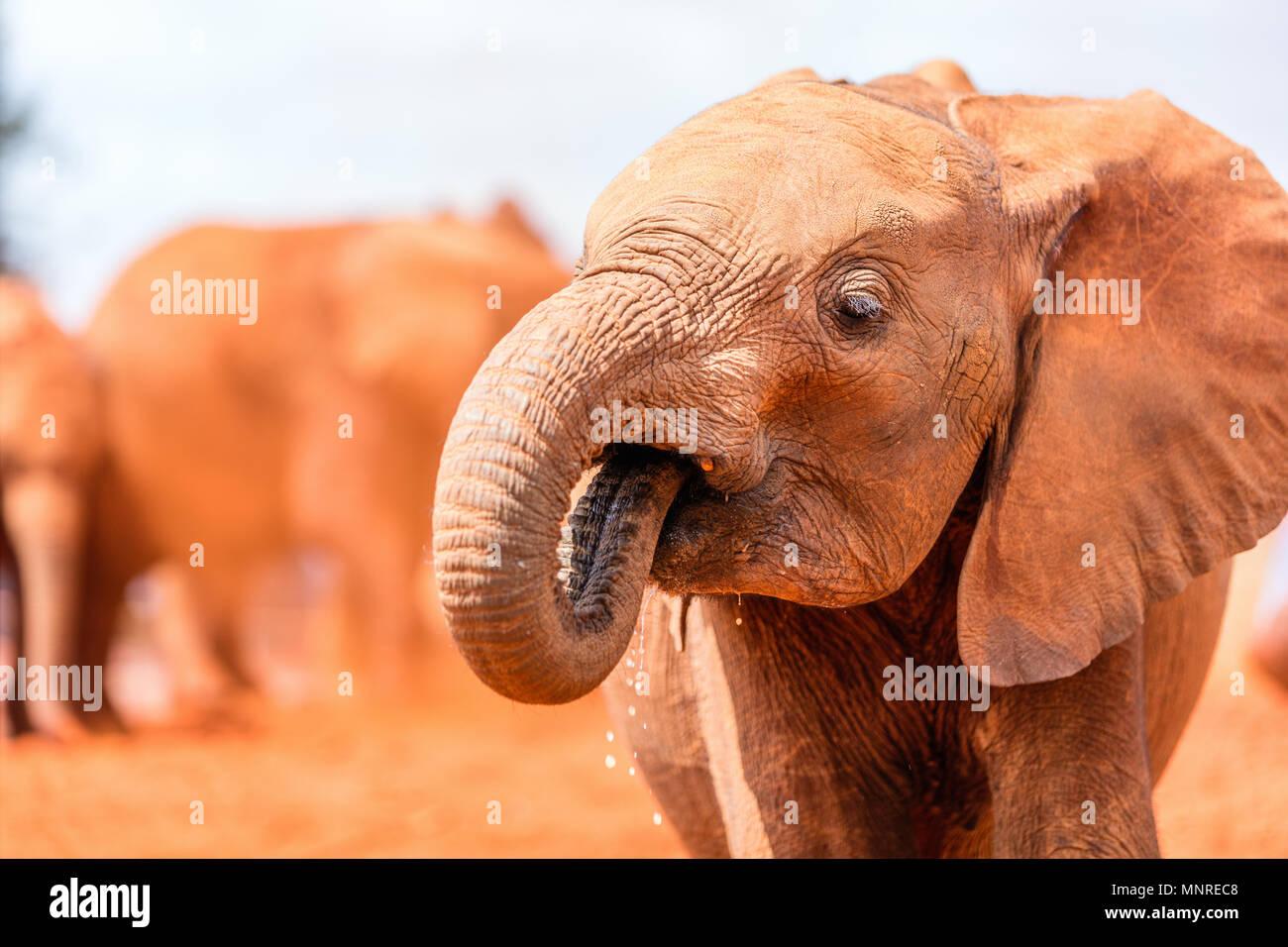 Close up de l'éléphant au parc safari Photo Stock