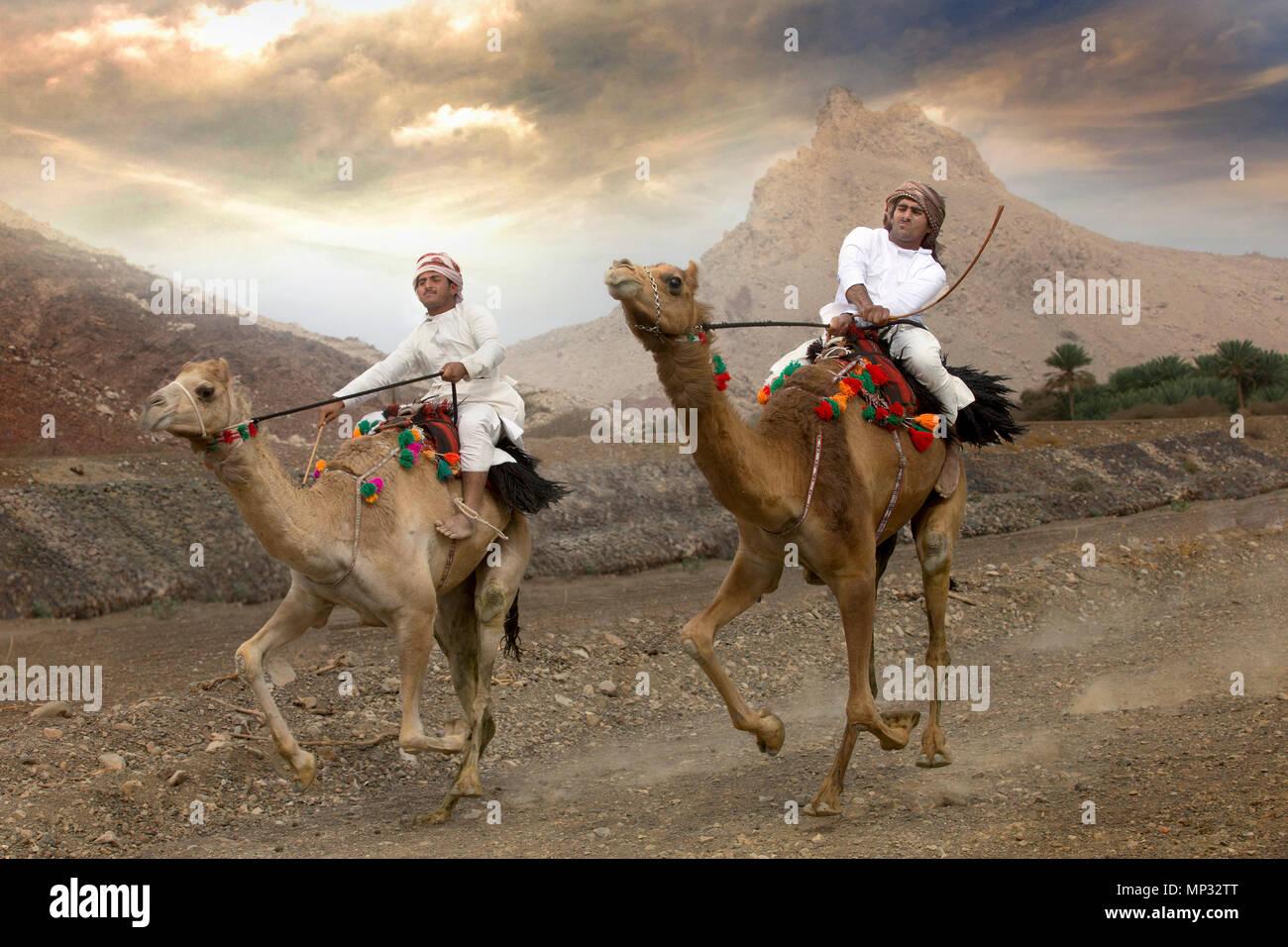 Khadal, Oman, 7 avril 2018: les hommes course de chameaux sur une route poussiéreuse campagne Photo Stock