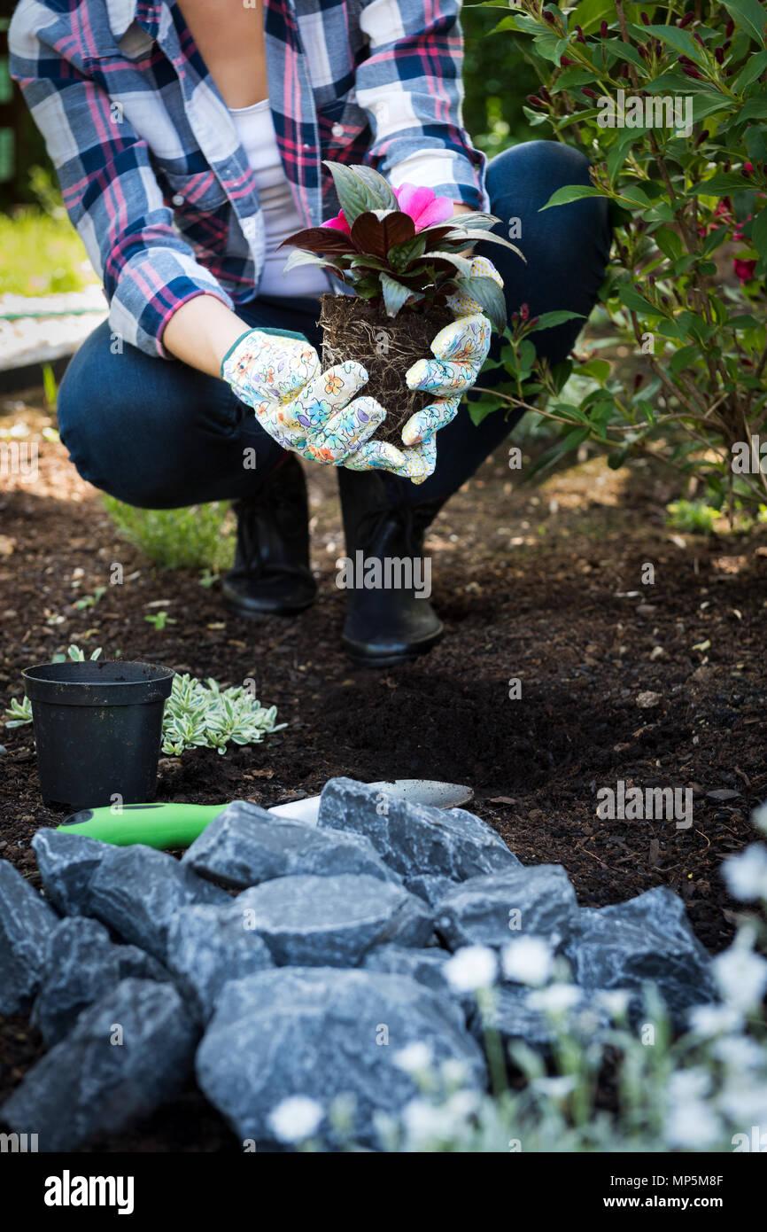 Méconnaissable jardinier femelle holding belle fleur prêts à être plantés dans un jardin. Concept de jardinage. Aménagement paysager jardin petit démarrage d'entreprise. Photo Stock