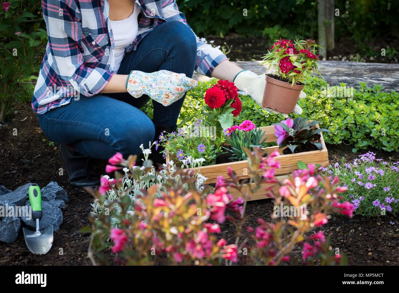 Méconnaissable jardinier femelle holding belle fleur prêts à être plantés dans un jardin. Concept de jardinage. Aménagement paysager jardin démarrage d'entreprise. Photo Stock