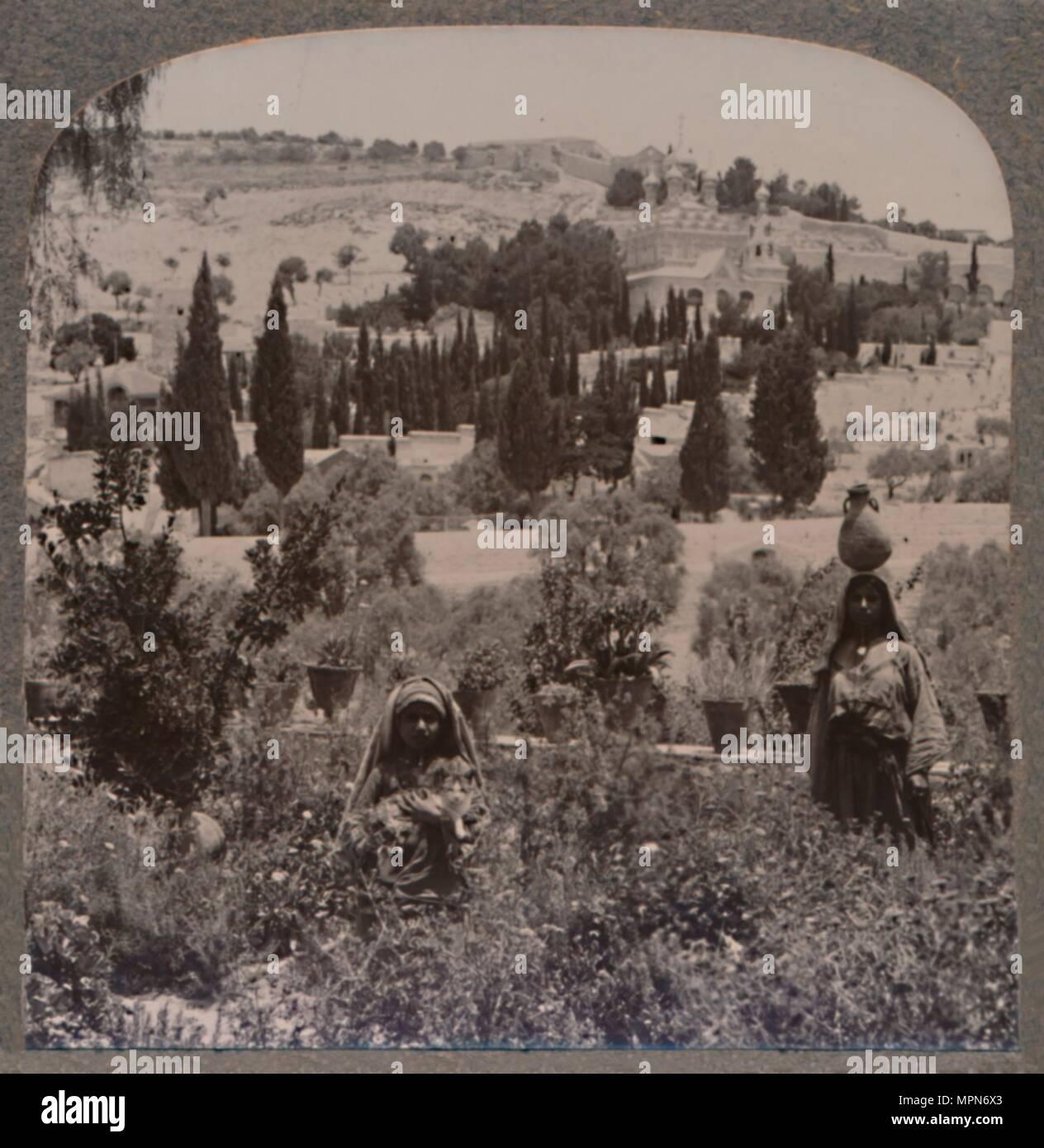 Garden Of Gethsemane Photos Garden Of Gethsemane Images Alamy