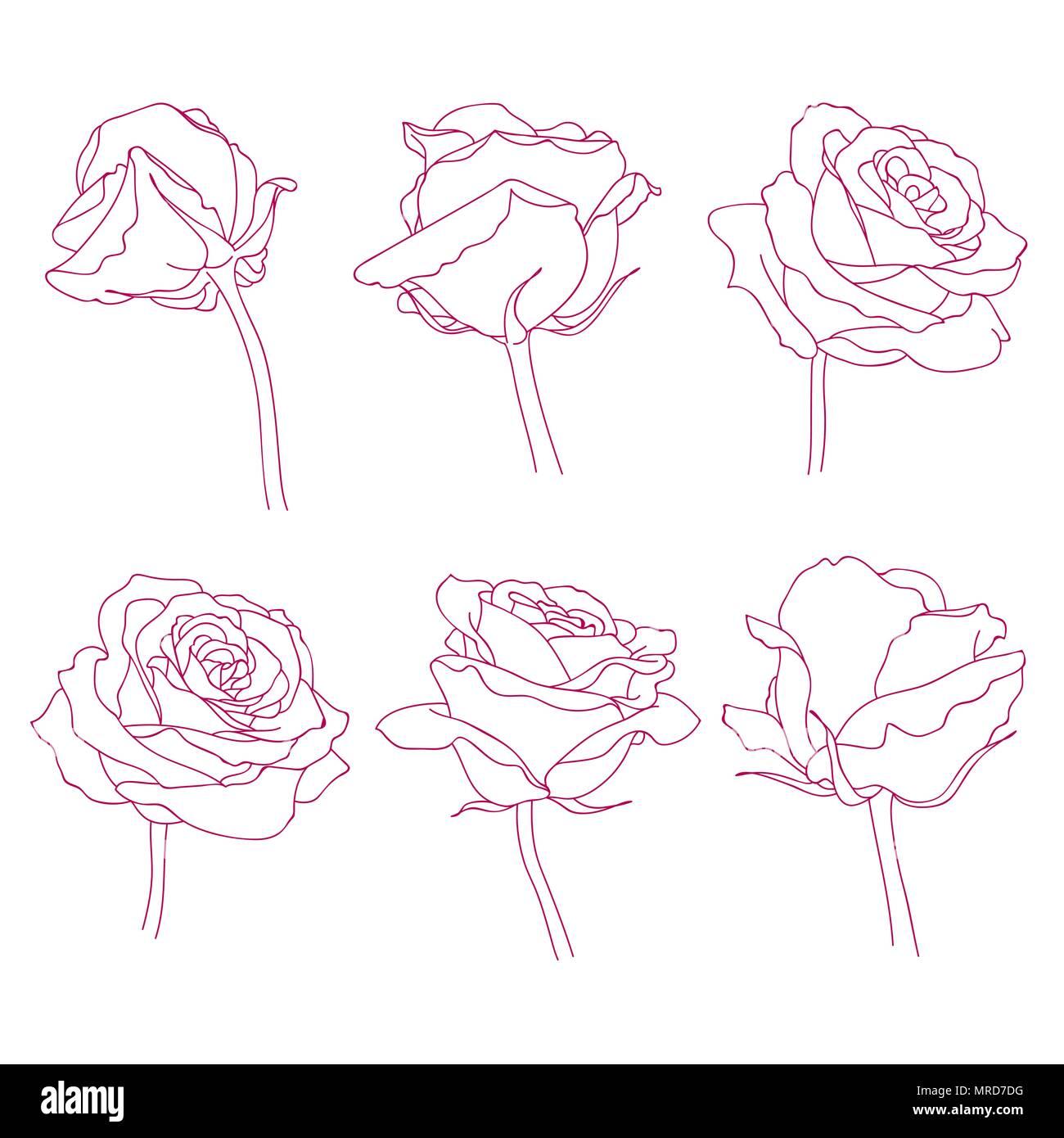 Fleurs Rose Jeux De Dessin Graphique Lineaire Vecteurs Et