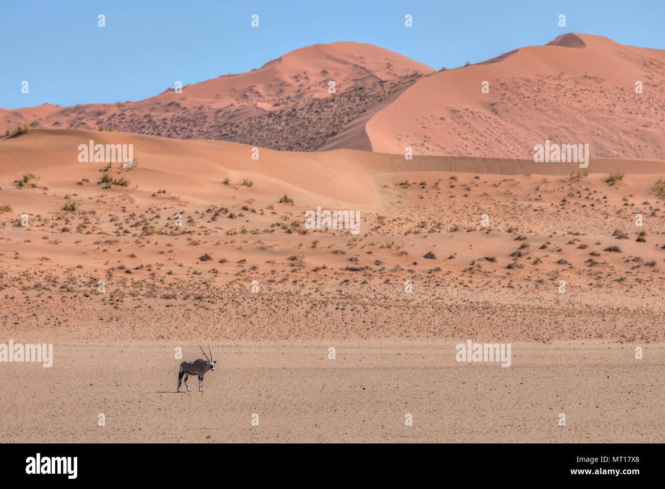Gemsbok, Sossusvlei, désert du Namib, Namibie, Afrique Photo Stock