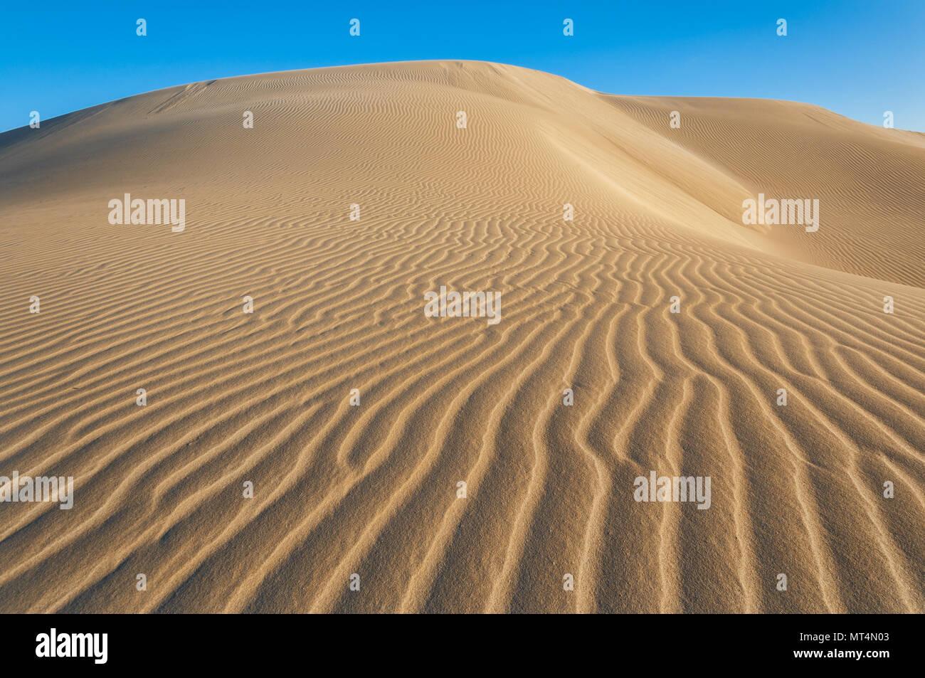 Les tendances dans les dunes de sable d'Eucla. Photo Stock