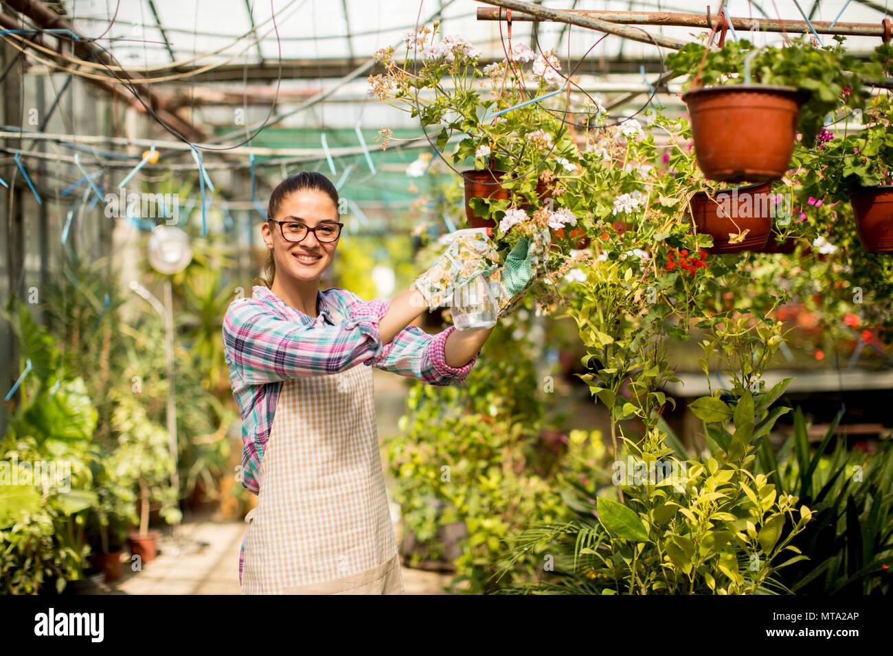 Jolie jeune femme travaillant avec les fleurs de printemps dans la serre Photo Stock