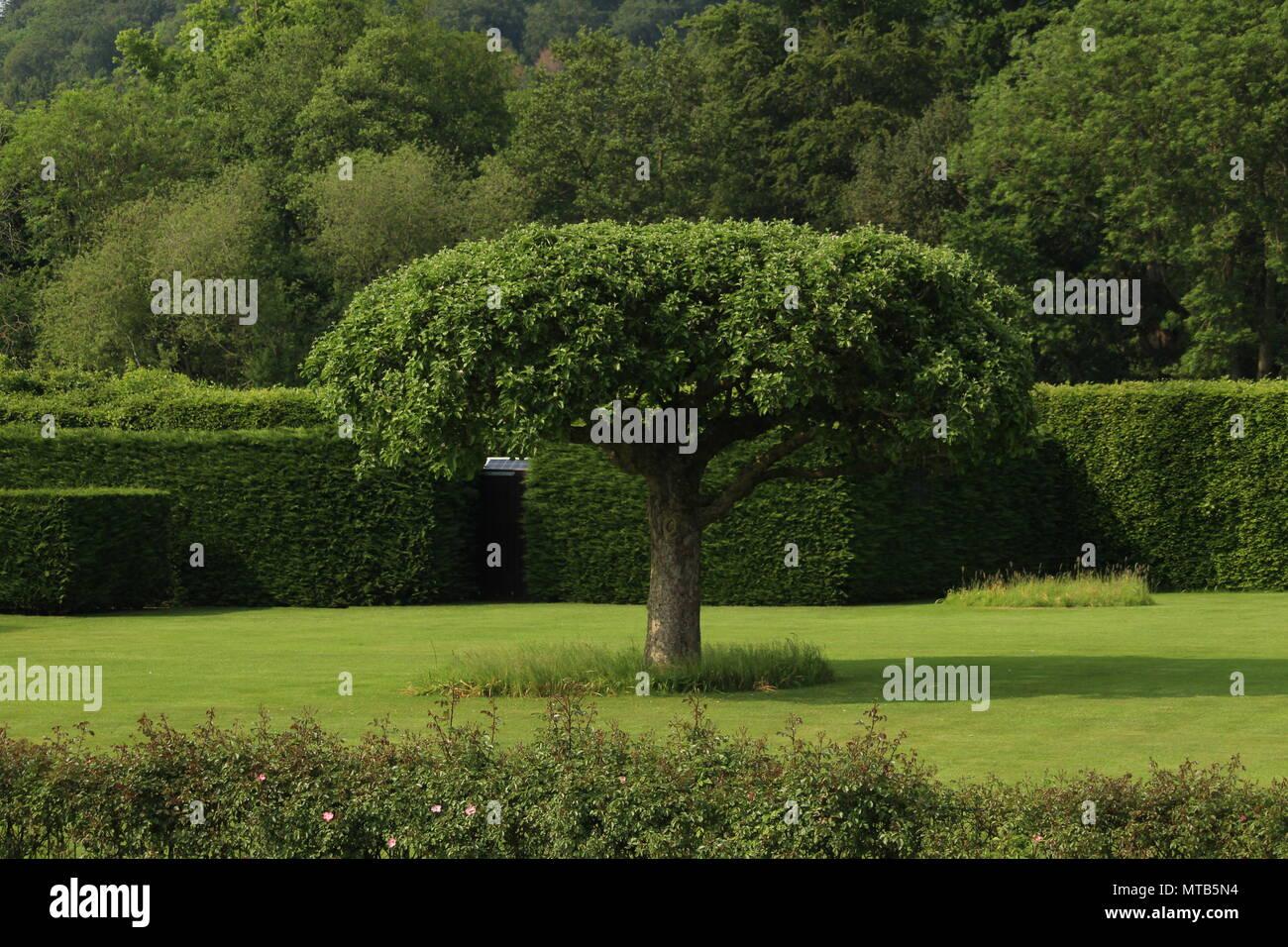 Plantes et Jardin design - Arbre fournissant belle point central au ...