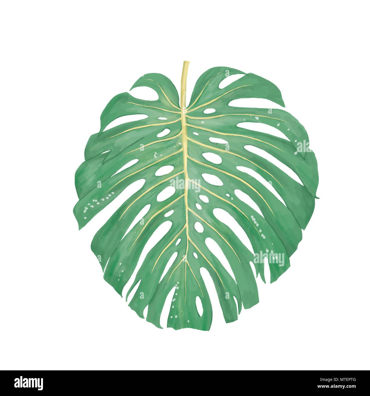 Clip art floral tropical feuille numérique. L'usine d'été sur fond blanc Photo Stock