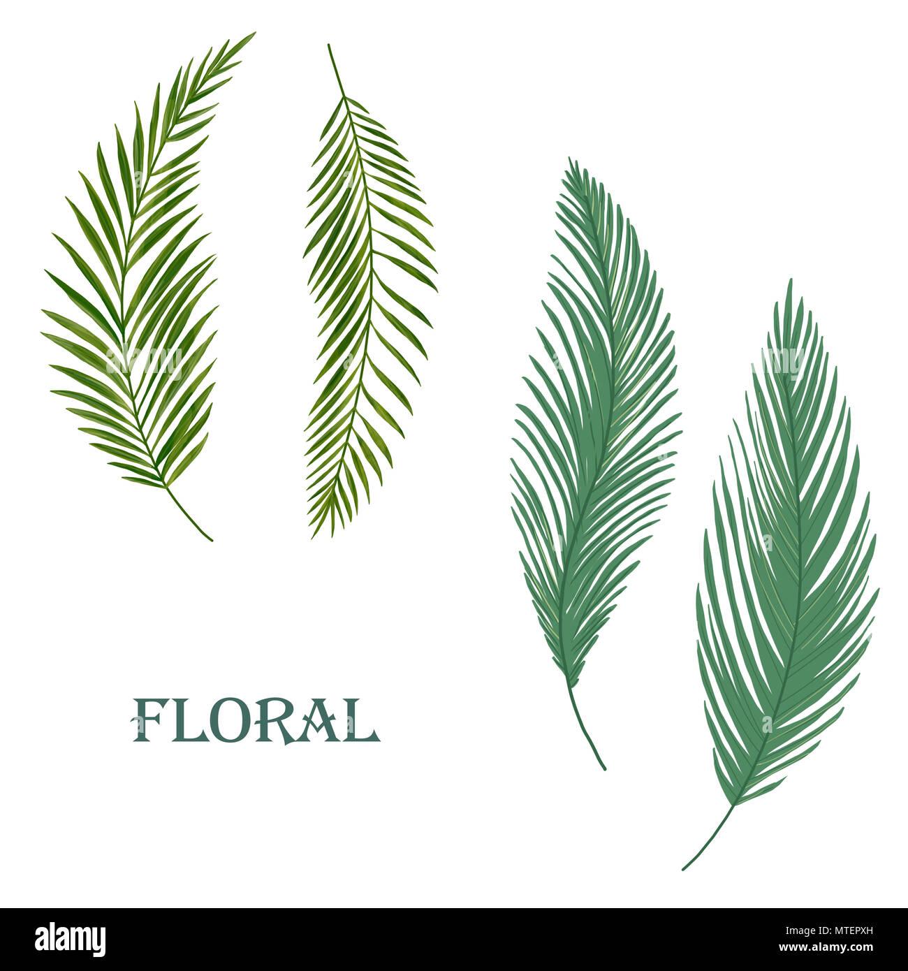 Clip art floral tropical feuille numérique Photo Stock