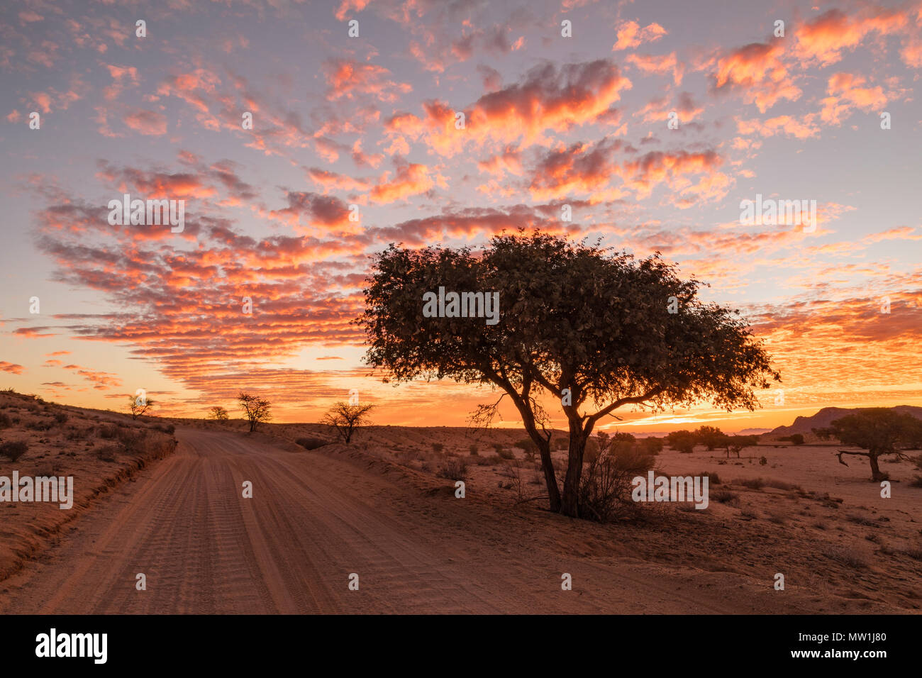 Aus, Namibie, Afrique du Sud Photo Stock