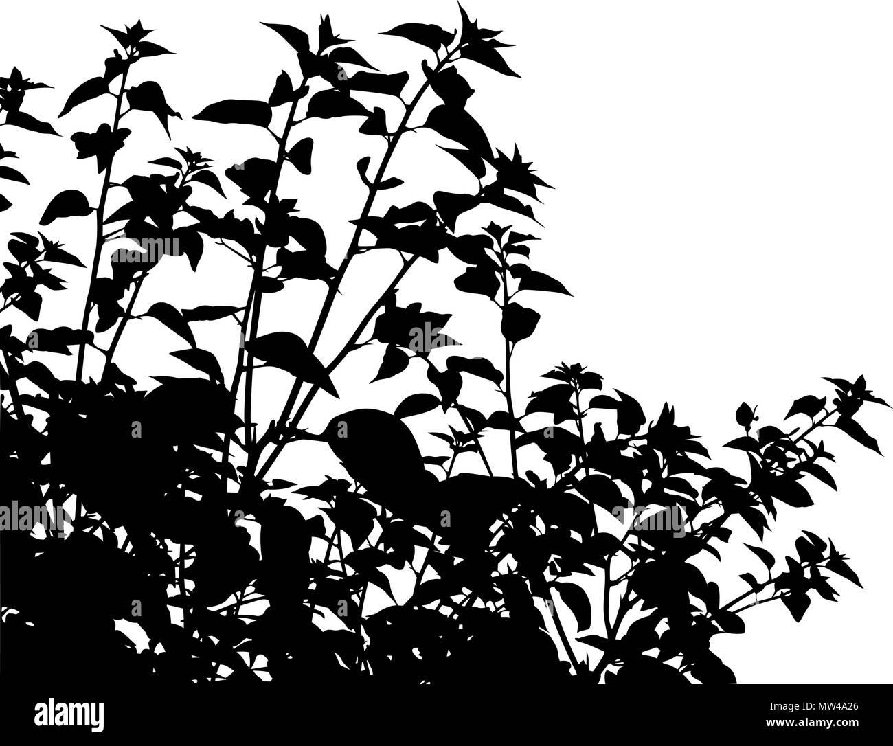 Silhouette vecteur modifiable de la végétation générique Photo Stock