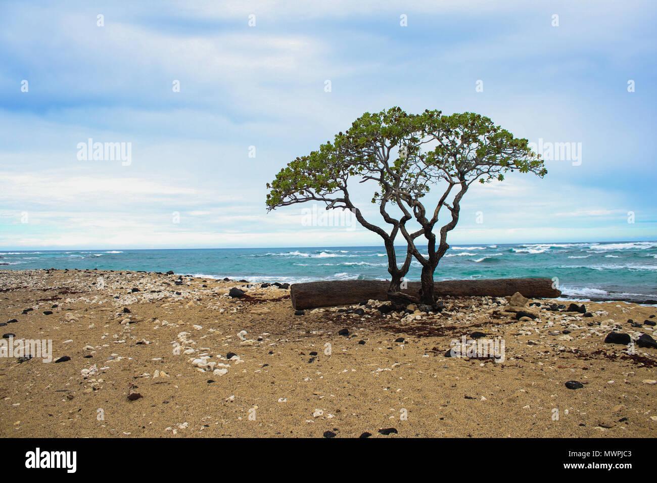 L'une des plus belles plages hautement cotées et dans le monde - Plage de Wailea, Maui, Hawaii, USA Banque D'Images