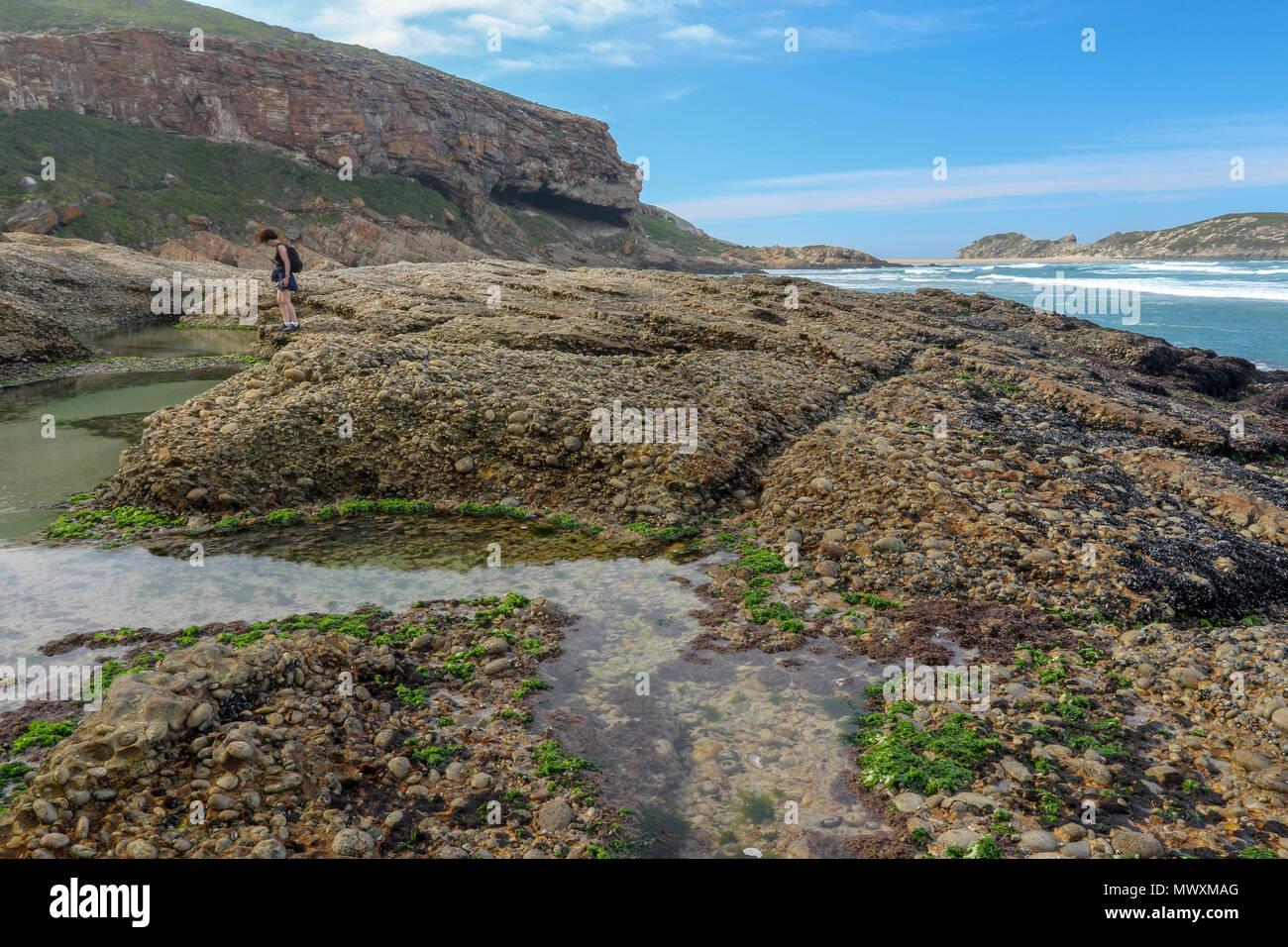 La réserve naturelle de Robberg, garden route, le Cap, Afrique du Sud Photo Stock