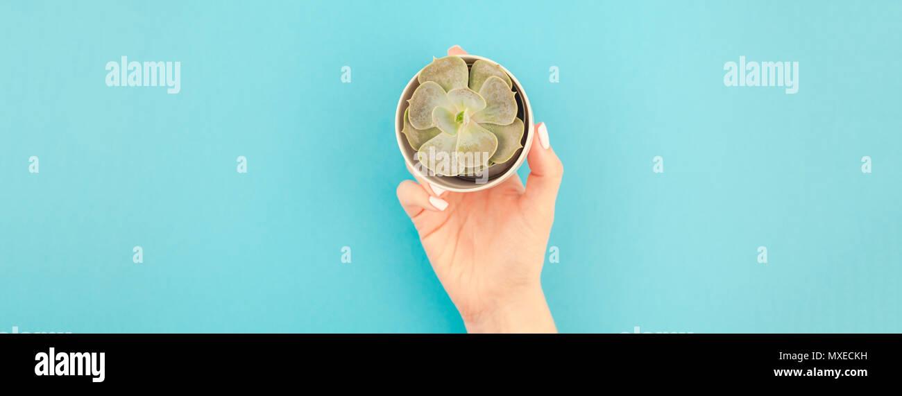 Longue Et Large Banniere De Femme Hands Holding Petit Pot Avec