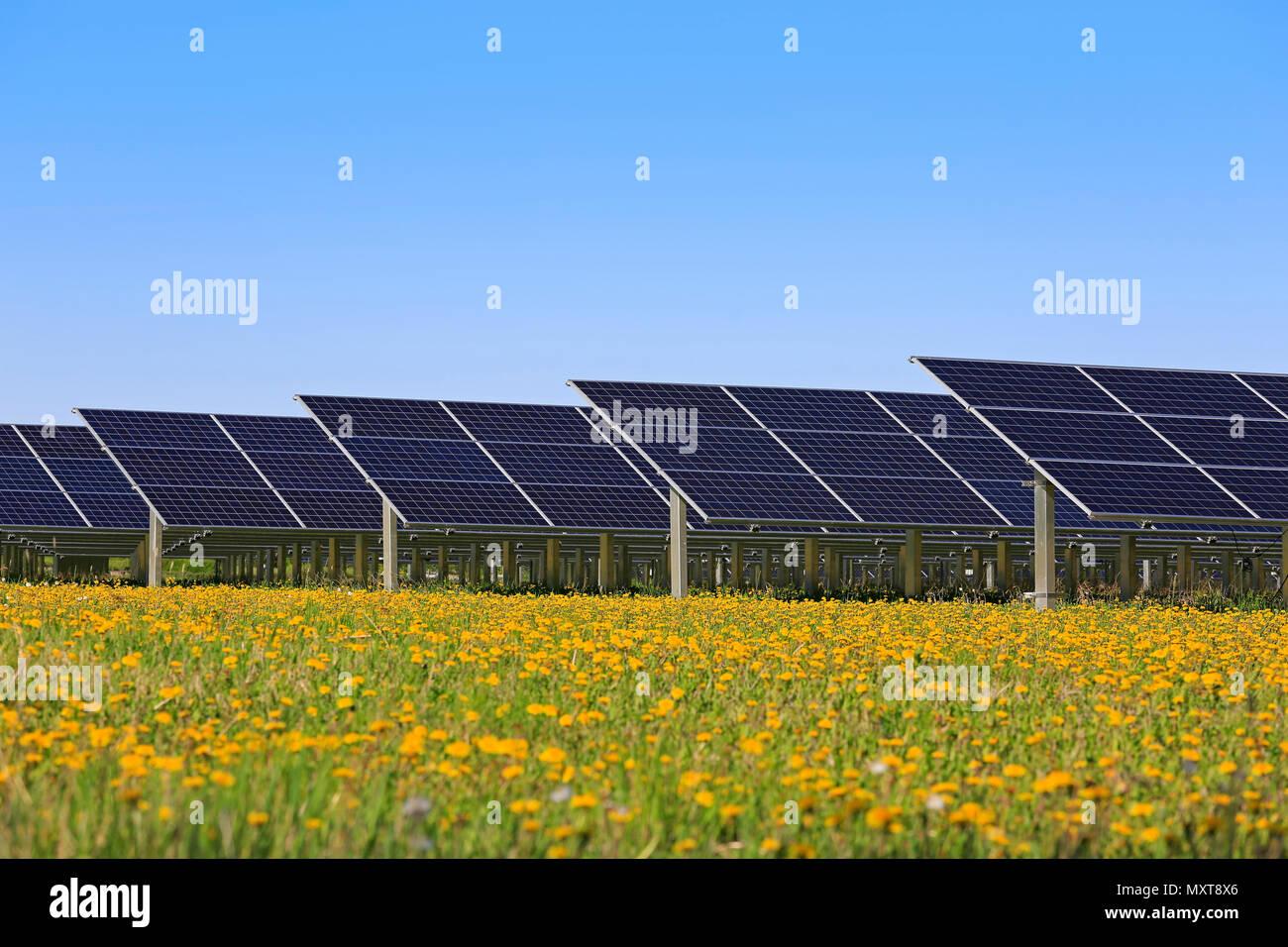 Des panneaux solaires sur un terrain vert avec des fleurs jaunes et bleu ciel au printemps. Photo Stock