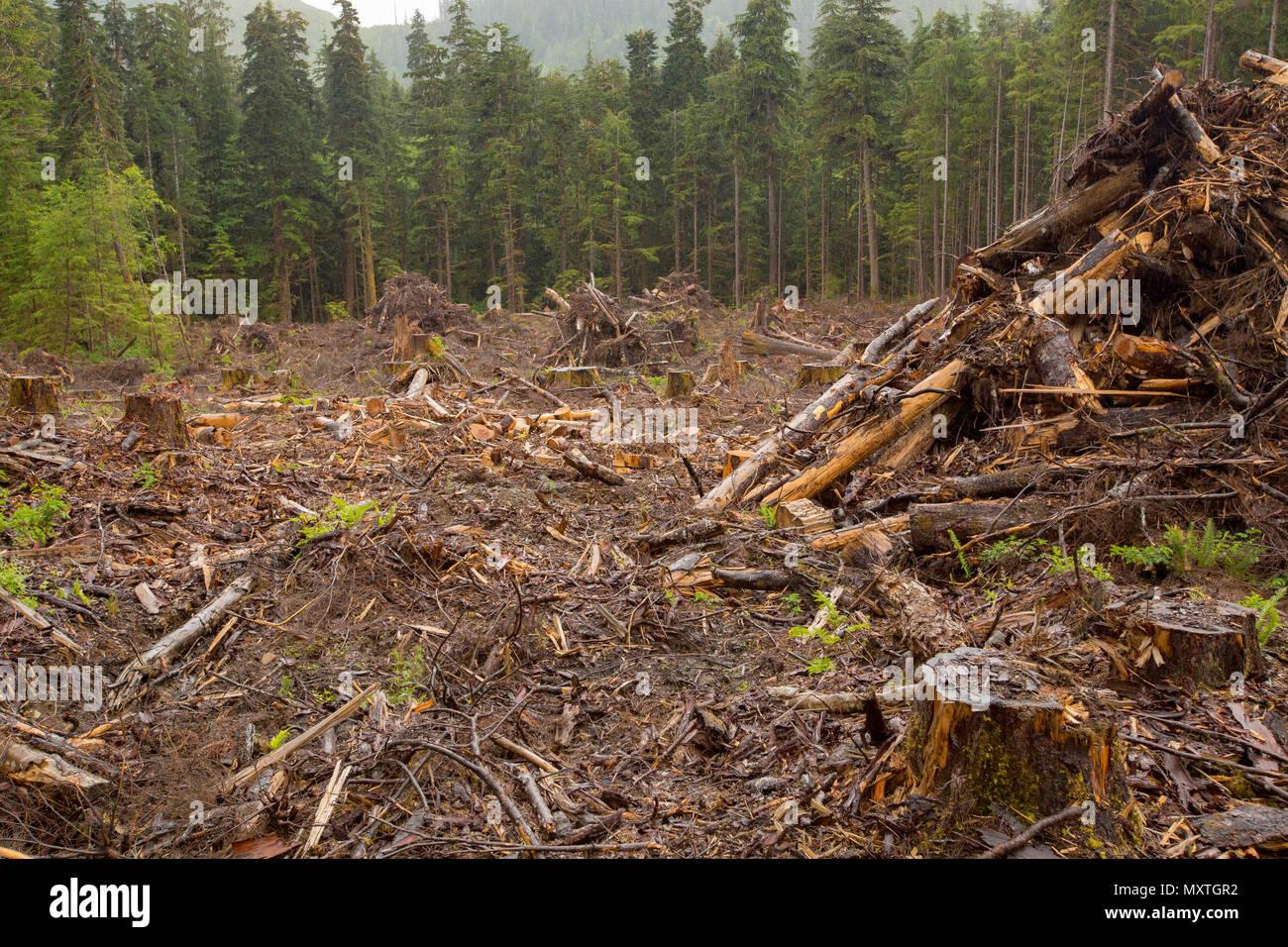 La déforestation l'exploitation forestière sur l'île de Vancouver. Coupe à blanc des arbres. British Columbia Canada. Photo Stock