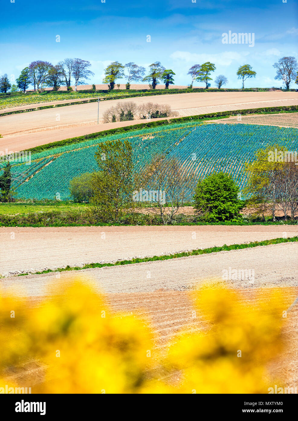 Patchwork des champs dans le printemps ! Photo Stock