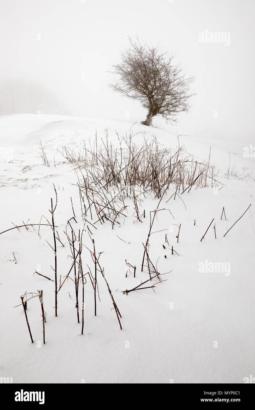 Paysage d'hiver monochrome de bush et le feuillage balayé par piquer à travers la neige, Chipping Campden, Cotswolds, Gloucestershire, Angleterre, Royaume-Uni Photo Stock