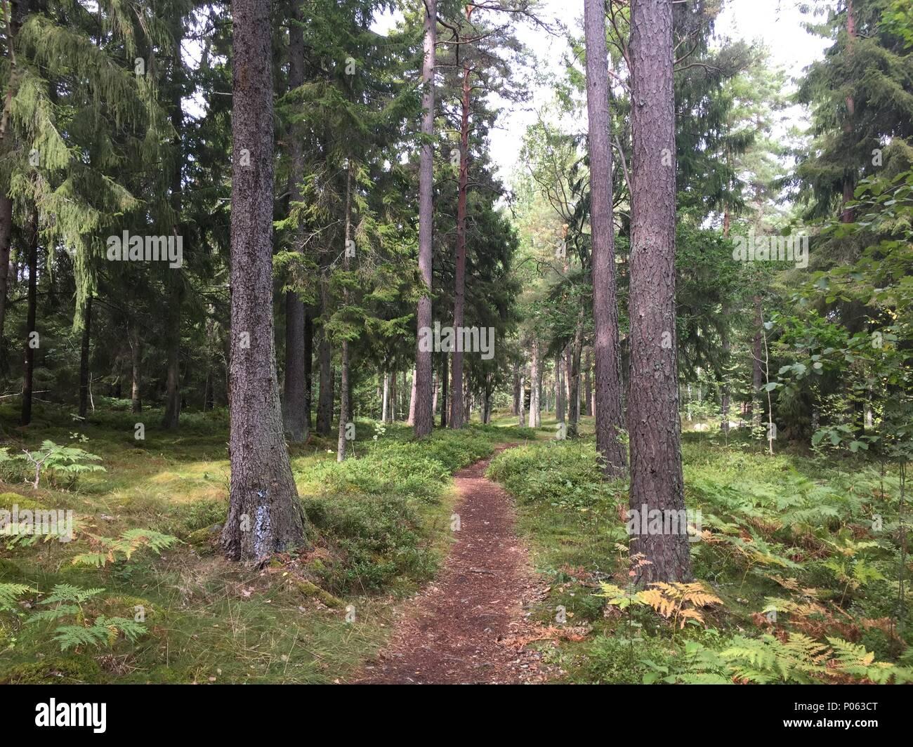 Weg durch den Wald dans Pommern, le chemin à travers les bois de la Suède Banque D'Images