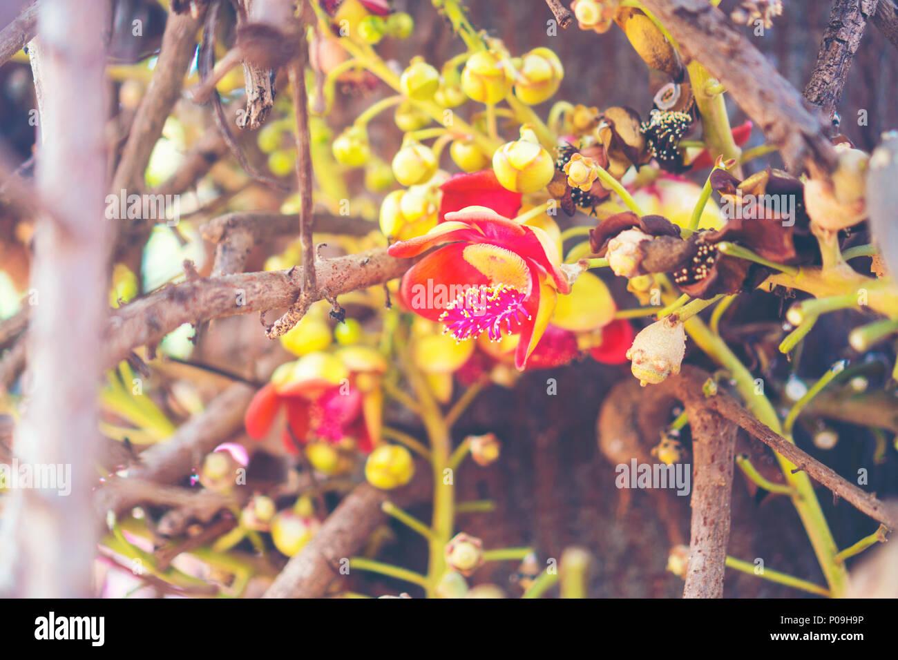 shorea robusta fleur ou sal arbre fleur sur l'arbre avec l'arrière