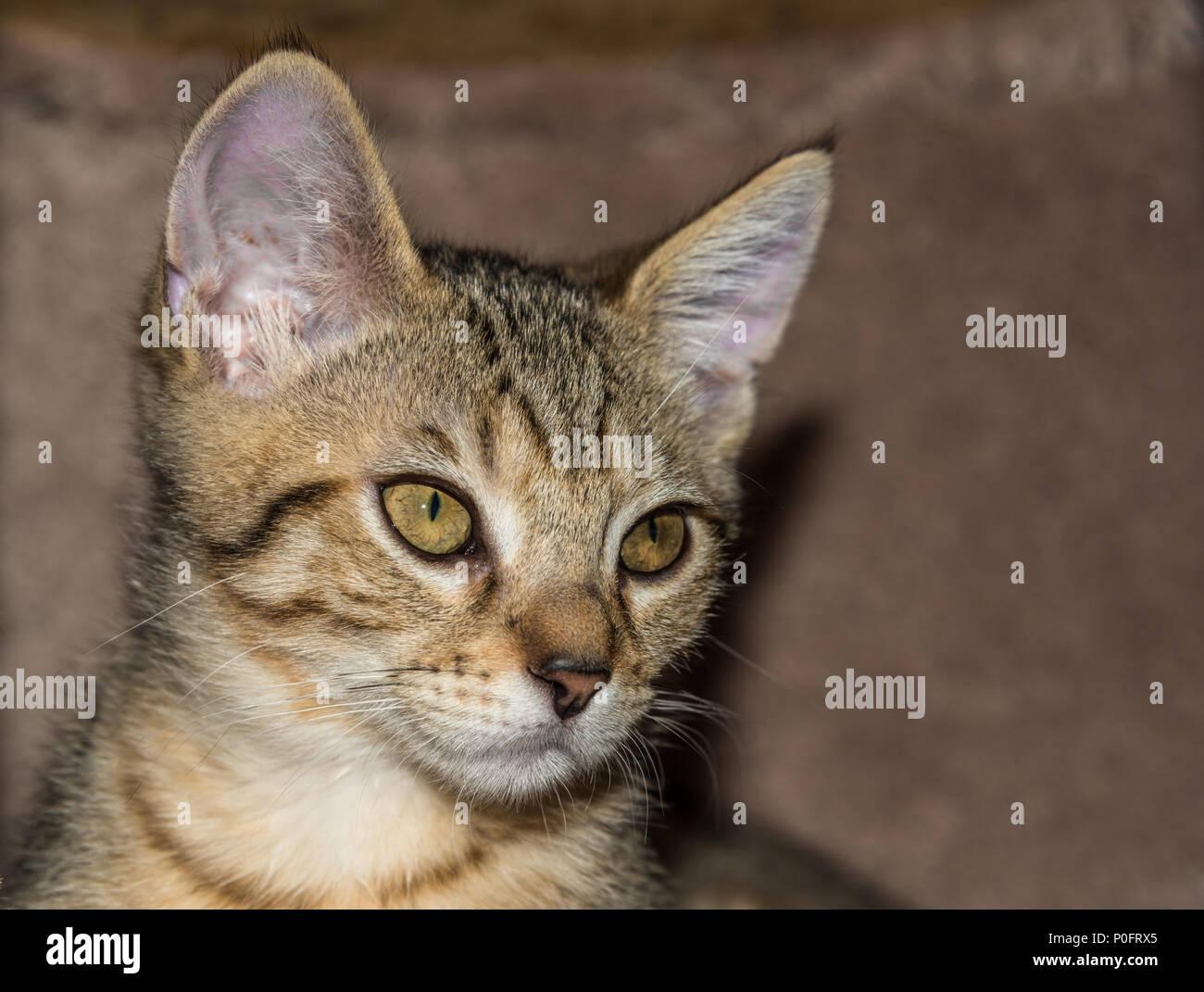 Portrait de chaton Banque D'Images