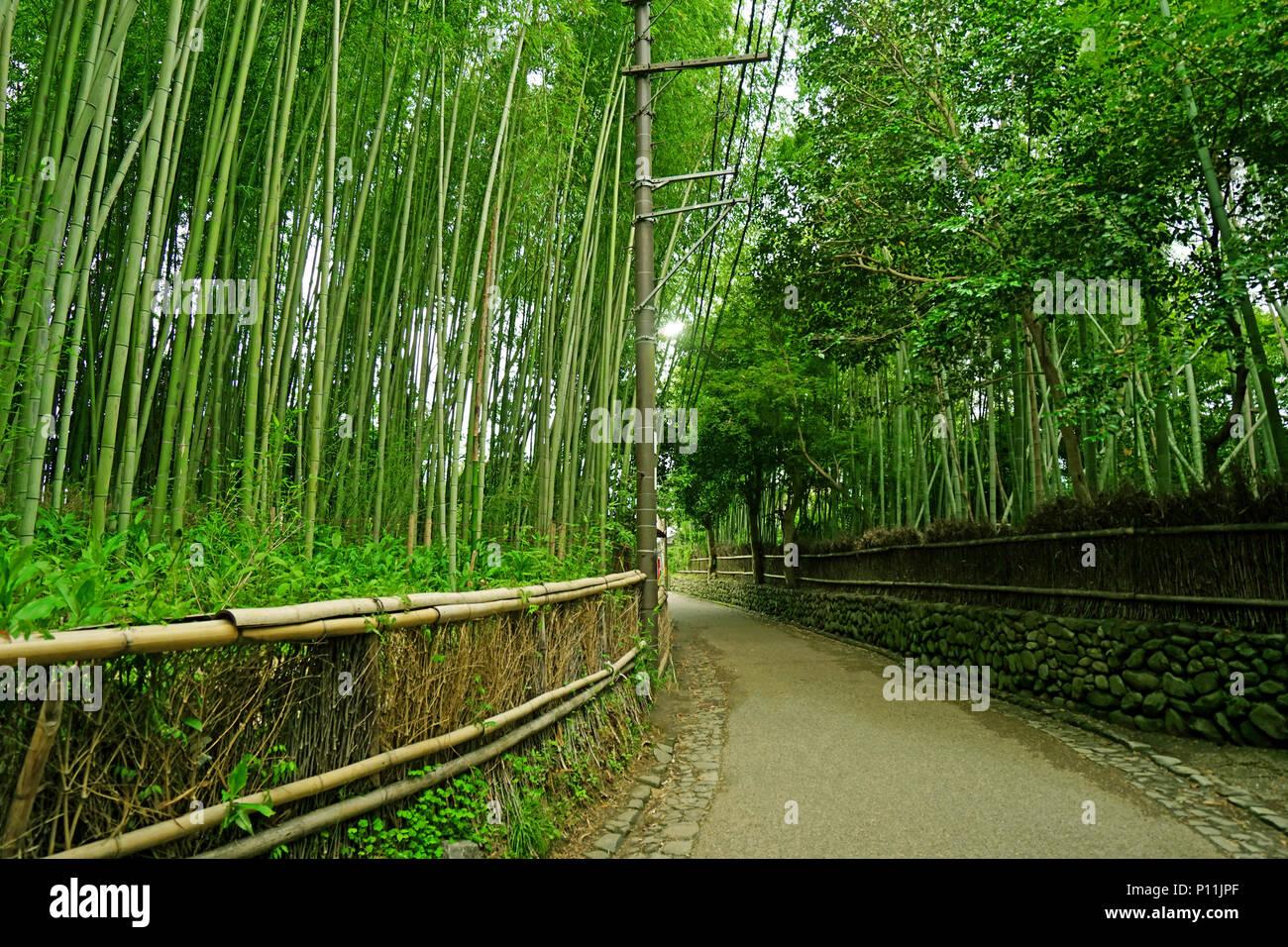 Le Bambou Vert Plantes Foret Et Sentier Du Jardin Zen Au